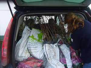 Majka my Wwoofer trying to cram all our tree loot into my car